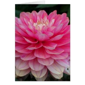 Carte vierge de dahlia rose