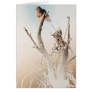Carte vierge de deuil de colombe par Andrew Denman