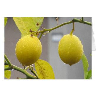 Carte vierge de note -- Citrons
