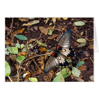 Carte vierge de note de papillon