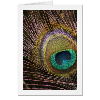 Carte vierge de plume de paon