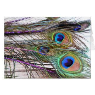 Carte vierge de plume de paon avec des couleurs