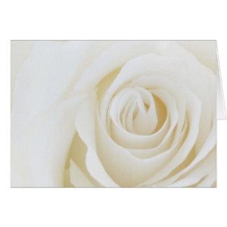 Carte vierge de rose blanc