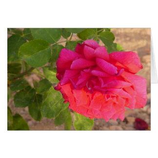 carte vierge de rose rouge