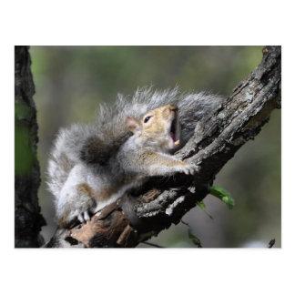 Carte vierge d'écureuil somnolent drôle