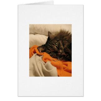 Carte vierge d'orange de chat