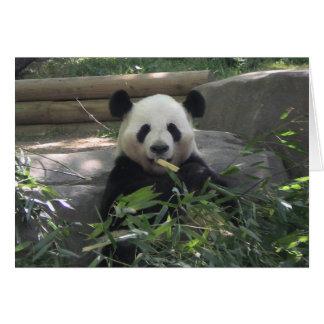 Carte vierge d'ours panda