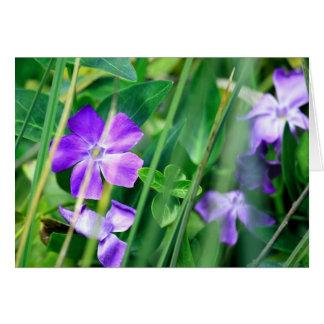 Carte vierge, fleur de mineur de Vinca