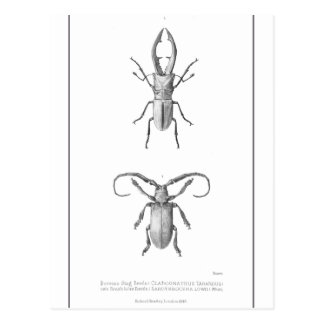 Carte vintage d'illustration de scarabée cartes postales