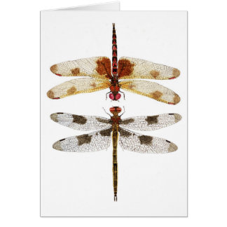 Cartes 2 libellules regardant l'un l'autre