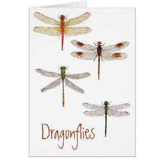 Cartes 4 libellules