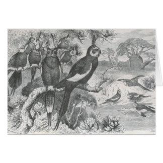 Cartes A.E. Brehm - Cockatiels