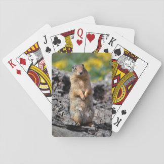 Cartes À Jouer Alerte d'écureuil moulu pour le danger