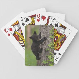 Cartes À Jouer Arbre d'escalade de CUB d'ours noir