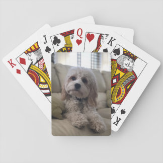 Cartes À Jouer Cartes de Cockapoo