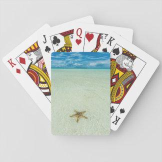Cartes À Jouer Étoile de mer en eau peu profonde, Palaos