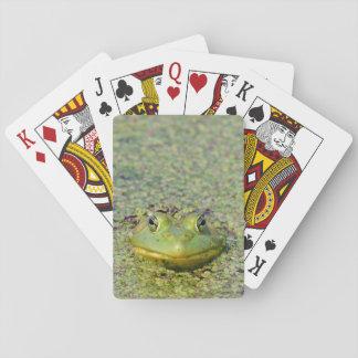 Cartes À Jouer Grenouille verte en lenticule, Canada