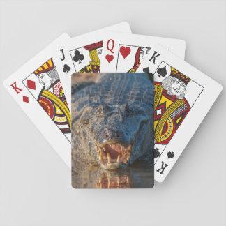 Cartes À Jouer Le Caiman montre ses dents, Brésil
