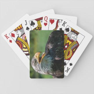 Cartes À Jouer photo d'aigle