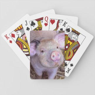 Cartes À Jouer Porc