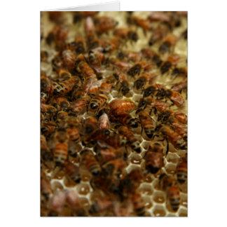 Cartes Abeilles de miel