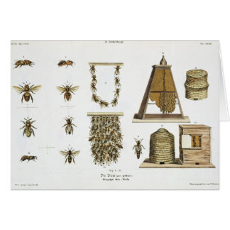 """Cartes Abeilles et apiculture, """"du jeune terrien"""", p"""