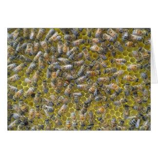 Cartes abeilles sur le nid d'abeilles