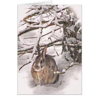 Cartes Abri de recherche de lapin