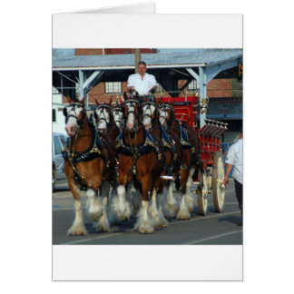 Cartes Accroc de cheval de Clydesdale 6