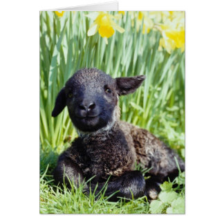 Cartes agneau jaune dans le printemps, fleurs de