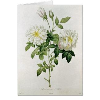 Cartes Aime Vibere gravé par Eustache Hyacinthe