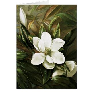 Cartes Alicia H. Laird : Magnolia Grandflora