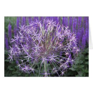 Cartes Allium/Salvia
