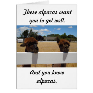 Cartes Alpaga dans Templeton, la Californie