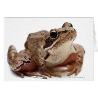 Cartes Amarrez la grenouille - arvalis de Rana