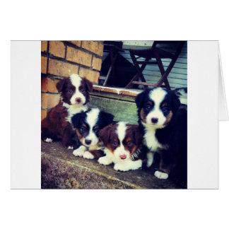 Cartes Amour de chiot - bergers australiens adorables