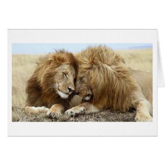 Cartes Amour de lion