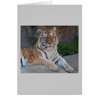 Cartes Amour de tigre
