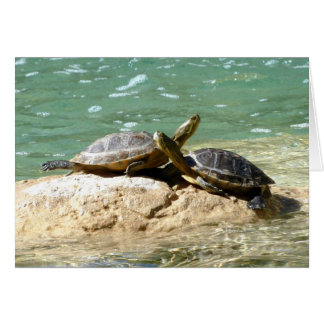 Cartes Amour de tortue