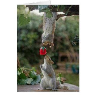 Cartes Amour d'écureuil