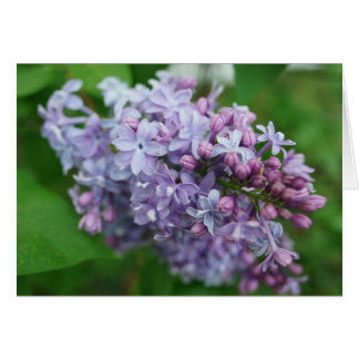 Cartes Amour lilas
