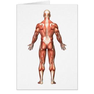Cartes Anatomie du système musculaire masculin, vue