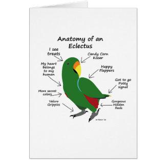 Cartes Anatomie d'un Eclectus