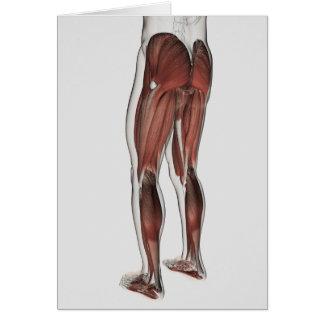 Cartes Anatomie masculine de muscle des jambes humaines 1