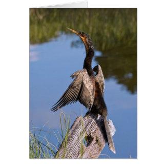 Cartes Anhinga à l'étang