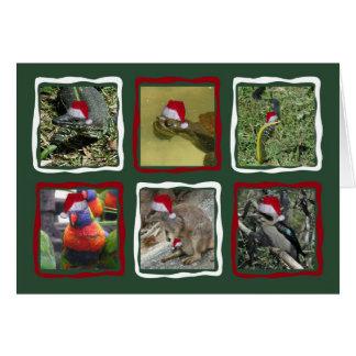 Cartes Animaux australiens de Noël