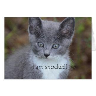 Cartes Anniversaire tardif de chat gris
