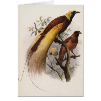 Cartes Apoda d'Elliot - de Paradisea - un plus grand
