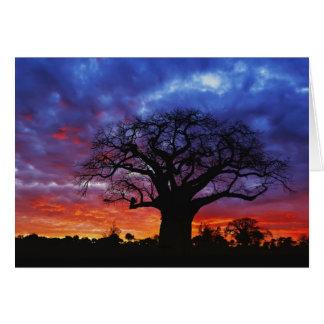 Cartes Arbre africain de baobab, digitata d'Adansonia, 2
