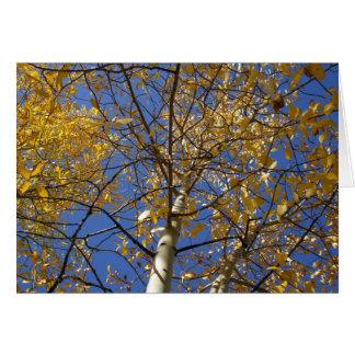 Cartes Arbre d'Aspen recherchant par les feuilles jaunes
